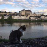 Amboise, Renaissance capital